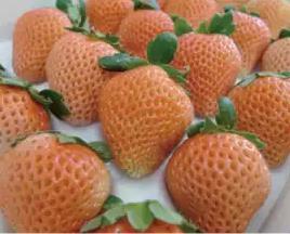 東てる美のイチゴは高級でヤバい!銘柄や値段と購入方法を公開!