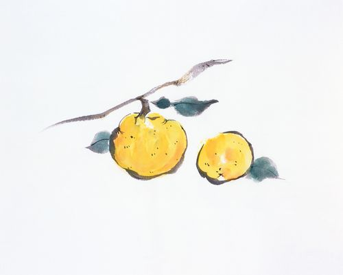 柚子(ゆず)時期や育て方とお風呂(ゆず湯)の効果や注意点は?